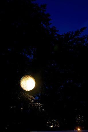 """""""Mondlicht"""" - Reflexionen in das Blattwerk."""